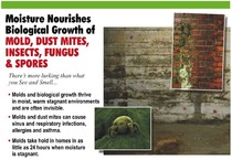 mold, dust mites, fungus, insects